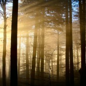 Exposition la Forêt, une communauté vivante