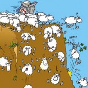Les moutons sont de sortie !